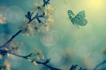 Vintage photo of butterfly and tree flowers