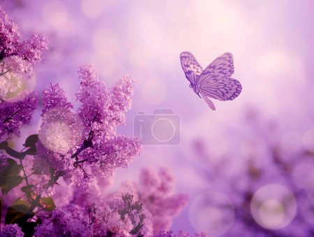 Photo for Butterfly and lilac bush in spring nature sunset - Royalty Free Image