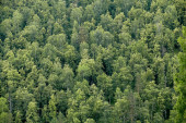 View from above on taiga forest.