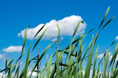 Photo pour Beau ciel bleu et herbe verte - image libre de droit