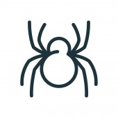 Spider Insect Minimal Flat Line Stroke Icon Pictogram