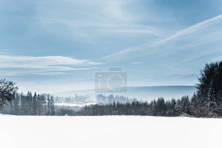 Photo pour Paysage avec des montagnes et des arbres des carpates blanches enneigées en hiver - image libre de droit