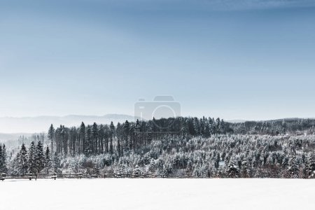 Photo for Landscape with forest and carpathian mountains covered with snow - Royalty Free Image