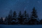 """Постер, картина, фотообои """"темное небо, полное блестящих звезд в Карпатских горах в зимнем лесу ночью"""""""