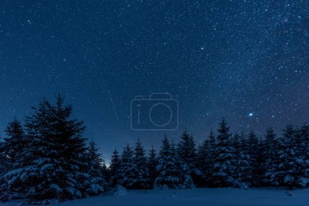 Photo for Dark sky full of shiny stars in carpathian mountains in winter forest at night - Royalty Free Image