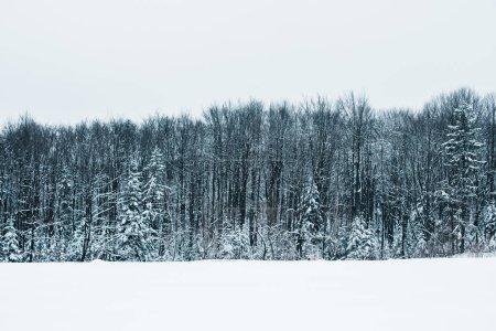 Photo pour Paysage de montagnes carpates avec neige blanche, ciel clair et arbres - image libre de droit