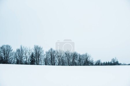 Photo for Landscape of carpathians with white snow, clear sky and trees - Royalty Free Image