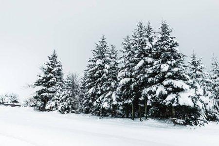 Photo pour Route dans les montagnes des Carpates couvertes de neige entre les sapins - image libre de droit