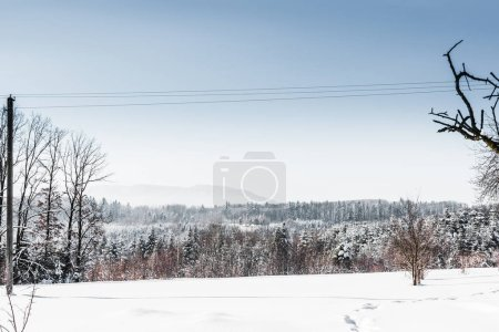 Photo for Snowy white forest in carpathian mountains with clear blue sky - Royalty Free Image