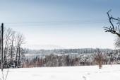 """Постер, картина, фотообои """"Снежная белая лес в Карпатских горах с четкие голубое небо"""""""