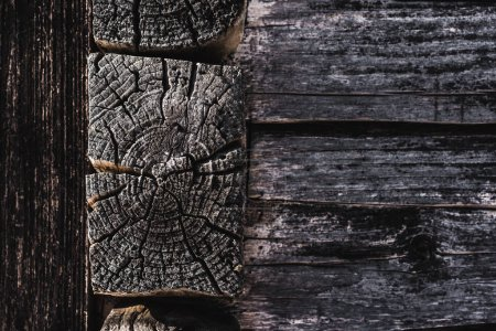 Photo for Dark brown weathered textured wooden logs - Royalty Free Image
