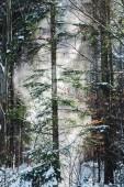 """Постер, картина, фотообои """"лес с солнцем через зеленые деревья и снегопад"""""""