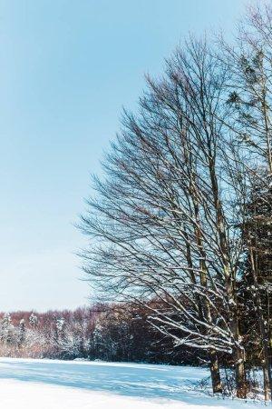 Trockene Bäume in den Karpaten mit Schatten auf Schnee