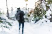 """Постер, картина, фотообои """"выборочный фокус ветвь дерева пихты в снежном лесу с путешественника на фоне"""""""