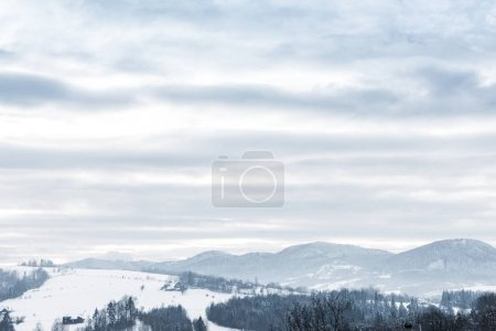 Photo for Landscape of carpathian mountains covered with snow with cloudy sky and trees - Royalty Free Image