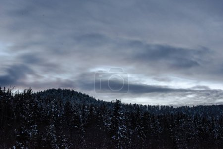 Photo for Landscape of carpathian mountains covered with snow with cloudy sky and trees in evening - Royalty Free Image