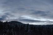 """Постер, картина, фотообои """"ландшафта Карпатских гор покрыты снегом с пасмурное небо и деревья в вечер"""""""