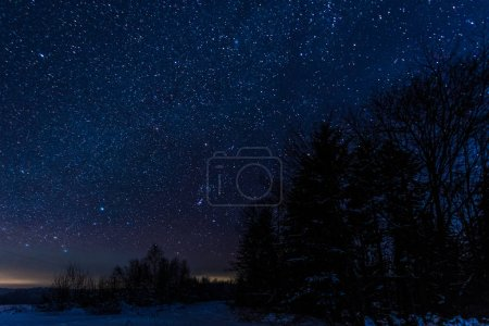 Photo for Starry dark sky and trees in carpathian mountains at night in winter - Royalty Free Image