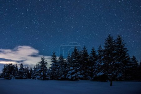 Photo for Starry dark sky and spruces in carpathian mountains at night in winter - Royalty Free Image