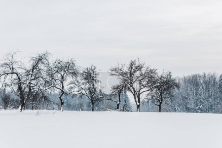 Photo for Scenic view of carpathian mountains and trees covered with snow - Royalty Free Image