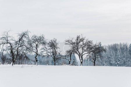 Foto de Vista panorámica de las montañas de los Cárpatos y los árboles cubiertos de nieve - Imagen libre de derechos