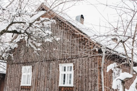 rural aged wooden cottage and dry trees covered with snow