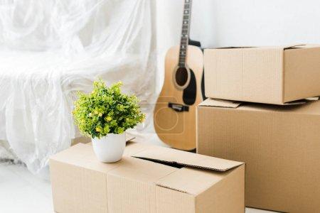 Foto de Guitarra acústica, cajas de cartón y planta verde en casa - Imagen libre de derechos