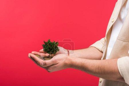 Photo pour Vue cultivée de l'homme retenant l'arbre d'argent et les pièces d'isolement sur le rose - image libre de droit
