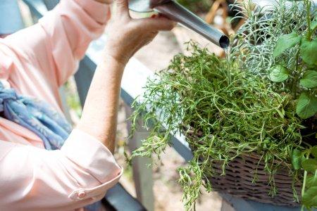 Photo pour Vue recadrée de la femme âgée arrosant la plante verte - image libre de droit