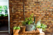"Постер, картина, фотообои ""flowerpots with green plants on wooden table near brick wall """