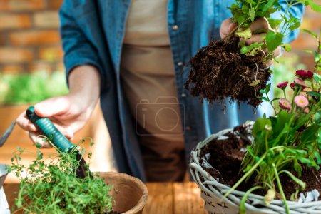 Foto de Vista recortada de la mujer mayor sosteniendo planta verde con el suelo cerca de maceta - Imagen libre de derechos