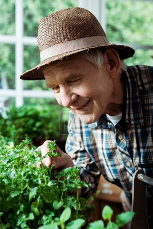 selective focus of happy retired man in straw hat looking at green plants