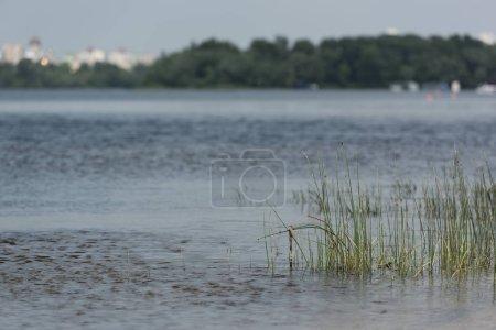 Photo pour Vue scénique de la rivière bleue avec l'herbe verte et les arbres - image libre de droit