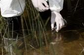 """Постер, картина, фотообои """"частичный вид водного инспектора в латексных перчатках с колба, берух образец воды"""""""