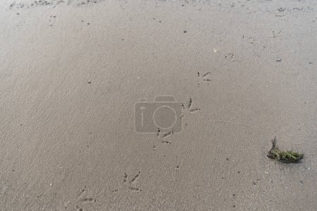 Photo for Top view of textured brown sand with bird footprints - Royalty Free Image