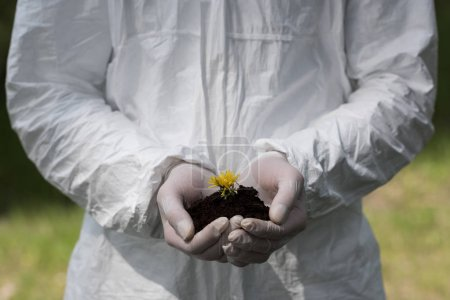 Photo for Partial view of ecologist in latex gloves holding handful of soil with dandelion - Royalty Free Image