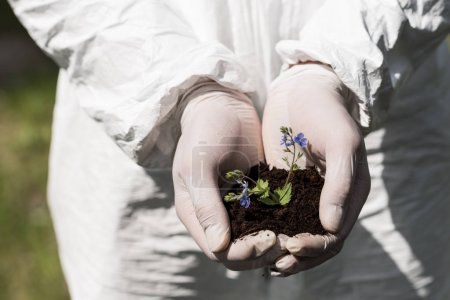 partial view of ecologist in latex gloves holding handful of soil with dayflowers