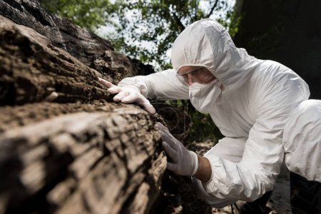 Photo for Ecologist in respirator, goggles and latex gloves touching tree bark - Royalty Free Image