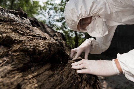 Photo pour Ecologist in respirator, goggles and latex gloves touching tree bark - image libre de droit