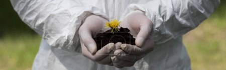 Photo for Panoramic shot of ecologist in latex gloves holding handful of soil with dandelion - Royalty Free Image