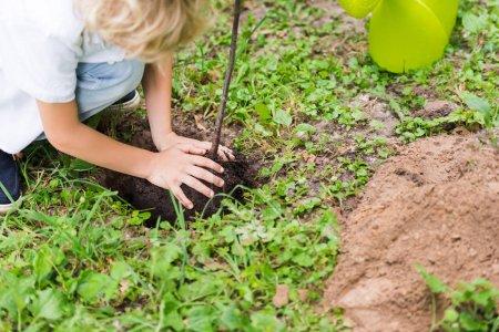 Photo pour Vue cultivée de garçon plantant le plant age dans le stationnement - image libre de droit