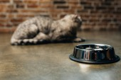 "Постер, картина, фотообои ""selective focus of metal bowl near scottish fold cat on floor"""
