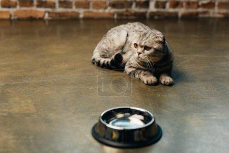 Photo pour Adorable chat de pli écossais se trouvant près du bol sur l'étage - image libre de droit