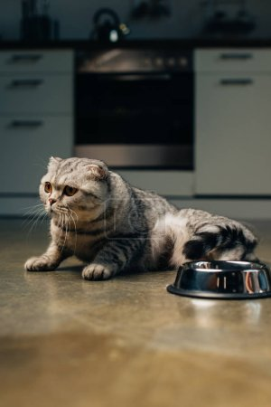 Photo for Adorable scottish fold cat near bowl on floor in kitchen - Royalty Free Image