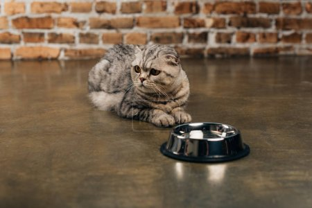 Photo for Cute scottish fold cat lying near bowl on floor - Royalty Free Image