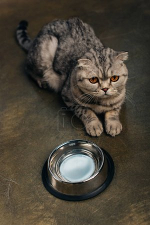 Photo for Cute scottish fold cat sitting near metal bowl on floor - Royalty Free Image