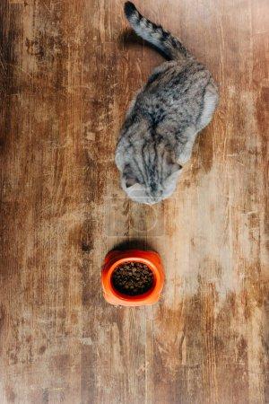 Photo pour Vue supérieure du chat de pli écossais près du cuvette avec la nourriture d'animal familier sur le plancher - image libre de droit
