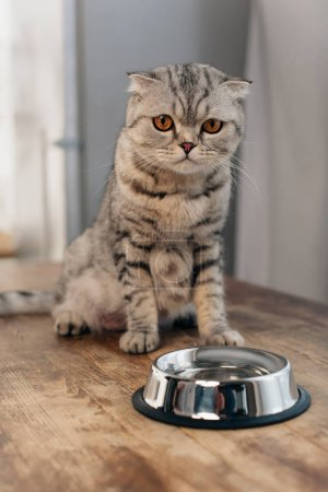 Photo for Adorable scottish fold cat sitting on table near metal bowl - Royalty Free Image