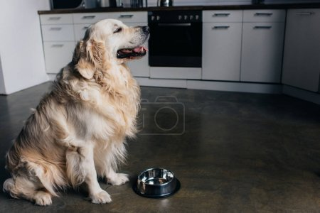 Photo for Adorable golden retriever dog near metal bowl at home in kitchen - Royalty Free Image