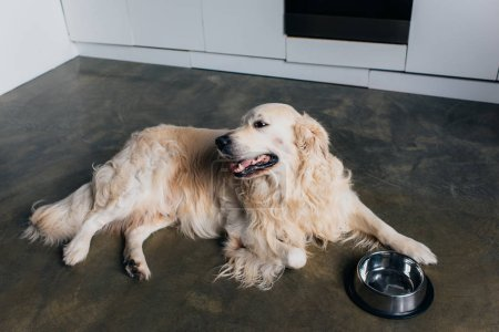 Photo for Cute retriever lying near metal bowl at home in kitchen - Royalty Free Image